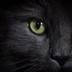 predator. (AliberTwist) Tags: animalphotography creepy bright haunting eyes catphotography cat