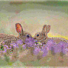 34254999225_91880a9fbc.jpg (amwtony) Tags: heathrowgatwickcarscom instagram european rabbit £european outdoors animals 341051574018ca2f0a50cjpg 3385184536054b44e2366jpg 34105609041101e0bbf78jpg 34236093465ece4972045jpg 34236237805810efdb7b4jpg 3419614267680248d853cjpg 34196281676d5c2e7b90cjpg 333954470949889fbba65jpg 33406211464e6fc7c9ca5jpg nature 341173798413e8066f1c7jpg 338641169005438812ec8jpg 3386445253005c94d116ejpg 34248191735859a1c06e2jpg 334072897046a6774af94jpg 3340746003412140d0f4cjpg 334076251242daaca13cfjpg 34248974795446f4a662ejpg 342492433757270b35db1jpg 334395869135cfb2aa68fjpg 341195643510294a1fdd6jpg 3340897491482d6b22df1jpg 334092727643abea2124djpg 34093767412ae5caf23b3jpg 34210599686cdf6f00124jpg 342109631462ab7800c6ejpg birds 3412116508138d5f44949jpg 33410559234d25f97fbd8jpg 33868460960d9575f1d9bjpg 33442359043f370a56fdbjpg 34252617035298d96dbf3jpg 34095978892bff39c13fajpg 334430316139acb579d5fjpg 3409638283266c3671e67jpg 34253425305a1afdc17d7jpg 34213291596214a49bf76jpg 334440434836274ac3bd9jpg 33870693860d5023b5c2djpg 334445965833c693f66f9jpg 338710847608eff10a7a5jpg 33413610914ac11ea8c69jpg