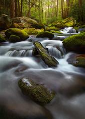 Refresh (Joaquin James Javier) Tags: smokies greatsmokymountains tennessee spring stream rush moss green flow boulders rocks