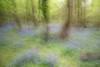 Bluebell movement LE (JCJ62) Tags: hampshire spring zeb landscape coast bluebells uk