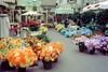 1962 Disneyland Flower Market (Tom Simpson) Tags: disney disneyland vintage vintagedisney vintagedisneyland 1962 1960s flower flowers flowermarket