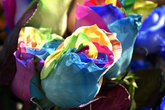 Rainbow roses (from reality) (tmboada) Tags: hydrangea rainbow rose petals artificially coloured drawn experimented stem