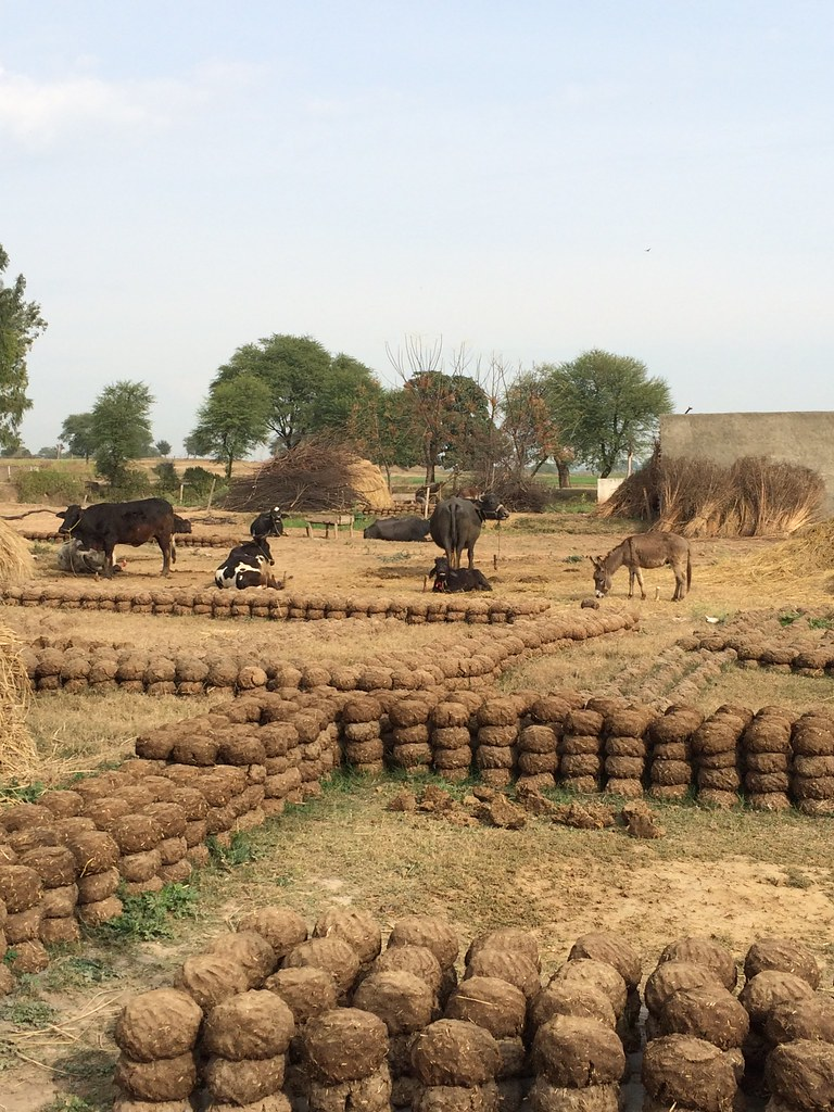 Jobs in Agriculture 2018 Latest