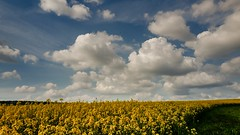 Colza - 605 (YᗩSᗰIᘉᗴ HᗴᘉS +5 400 000 thx❀) Tags: yellow clouds sky bluesky colza hensyasmine nature natural jaune leica leicaq