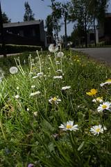Springtime (nokkie1) Tags: eindhoven holland netherlands flowers green lines flash