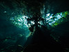 Forest at the Surface (altsaint) Tags: 714mm chacmool gf1 mexico panasonic cavern caverndiving cenote scuba underwater