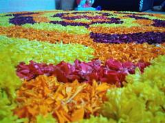 IMG_20160913_040059 (bhagwathi hariharan) Tags: onam pookalam flower rangoli kolam carpet floral nalasopara nallasopara virar aathapookalam tiruonam