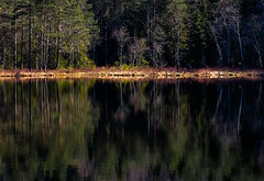Forest Shore (bjorbrei) Tags: water pond tarn lake calm tranquil reflections surface shore marsh trees forest marka lillomarka oslo norway