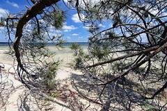 Dead tree (Ciceruacchio) Tags: tree arbre albero lake lac lago hourtin aquitaine aquitania france francia frankreich nikond750