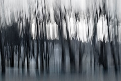 when I walked in the woods (Valerie Guseva) Tags: trees abstract light lights long exposure surreal icm impression russia smooth smudge hypnotic nature line illusion blur focus black minimalism grey lightpainting white shine deepness ngs dream dreamy calm blurred memory past painterly twop contemporary contrast unconscious movement drawing graphic shadow modern last experimental flow expression strange dark blackandwhite blackwhite evening far tree fire mysterious magic lost woods heavy grain haze death forest forward monochrome fog saintpetersburg sun sunbeam portugalthe man the