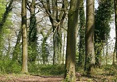 Light and shadow (Magreen2) Tags: forest trees light shadow sun sunny shining green brown magicdrainpipe licht schatten sonne sonnigwald bäume nature