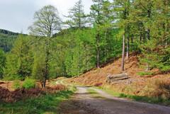 Atholl Woods (Spring Tones) (eric robb niven) Tags: eric robb niven