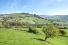 The Shropshire countryside (Baz Richardson (now away until 27 May)) Tags: shropshire farmland shropshirehillsareaofoutstandingnaturalbeauty countryside landscapes hills sheep cattle