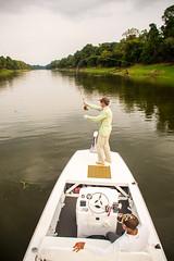 Pirarucu (Arapaima_Fishing) Tags: pirarucu2015 pirarucu arapaima fishing fly
