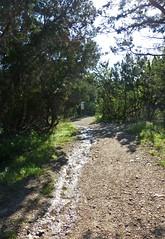 muddy trails_80723 (San Marcos Greenbelt Alliance) Tags: smgaphotobylancejones sanmarcosgreenbeltalliance springlakenaturalarea sinkcreek poetry