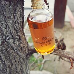 Chivas Regal Ultis (TheWhiskeyJug) Tags: chivasregalultis review whisky blended chivas ultis thewhiskyjug twj scotch