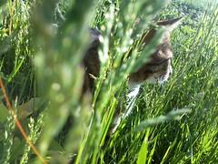 🐈 (Stefan Ursachi) Tags: cat cats grass nature cute artistic pussycat cool smartphone kitty amateur sunlight sunny beautiful beautifull pet rural