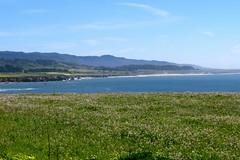 IMG_2977 (ihope88) Tags: california californiaflowers californiashoreline californiashore santacruz ocean pacific scenicpacific