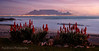 Pink and Red (Panorama Paul) Tags: paulbruinsphotography wwwpaulbruinscoza southafrica westerncape capetown tablemountain blaauwbergbeach aloes flowers longexposure beach sunset nikond800 nikkorlenses nikfilters