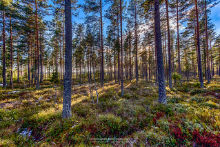 Deep into the Flisa forest (Explored)