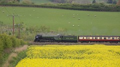 Green and Yellow 4 (ianwyliephoto) Tags: tornado 60163 steamengine steamtrain loco locomotive corbridge northumberland tynevalley tynedale ukrailtours train rapeseedoil yellow green
