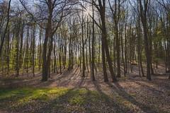 Armee der Schatten (DOKTOR WAUMIAU) Tags: backlit d7200 ishootraw landscape lightroom nikon ostsee sigma1835 vscofilm wideangle woods