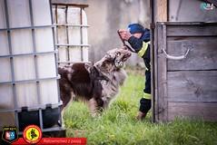 2017_04_22_ Qna _OSP Kęty Dzień psa ratowniczego_0041