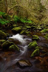 Reelig Glen in Spring (Gavin MacRae) Tags: reeligglen reelig moniackburn beauly inverness scottishglen scottishlandscape highlandsofscotland scotland river riverlongexposure scottishburn scottishvalley highlands scottishnature highlandnature highlandlandscape kirkhill spring woodland woodlandwalk