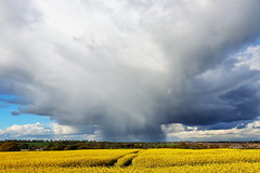 Hail Cloud Over Garforth 8787 (Yorkshire Pics) Tags: hail hailcloud rape rapeseed rapefield yellow storm garforth leeds eastleeds 2504 25042017 april aprilshowers