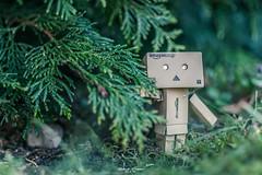 Member's Choice: Into the Woods #Danbo #MacroMondays (graser.robert) Tags: 35mm 52of2017 adobe bokeh choise d7100 danbo germany lightroom macro macromonays makro manga members member'schoiceintothewoods monday nikon robertgraser forrest lighttime miniature wood woods reinstädt thüringen deutschland de