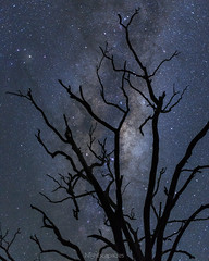 By the light of a billion suns (nightscapades) Tags: astronomy astrophotography galacticcore illawarra kiama milkyway night nightscapes nowra shoalhaven sky stars berry newsouthwales australia au