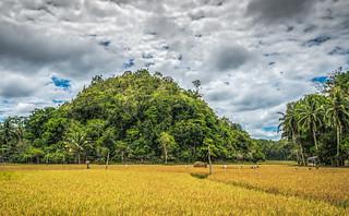 Scenic Rice Field