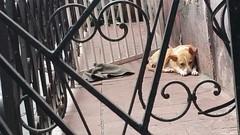Balcones de la Habana (3)