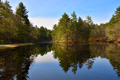 Pond (DaveLawler) Tags: pond reflection trees spring water blue sky massachusetts newengland nikon nikkor