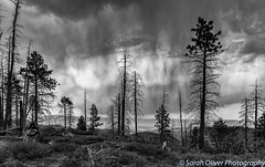 Stormy skies (SarahO44) Tags: bryce utah unitedstates us sky stormy clouds cloudscape rain trees tree silhouette monochrome black white canyon national park highway 63 dead moody outdoors nature landscape