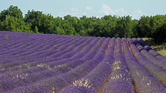 L'été en pente douce (Rollerphilc) Tags: canon nature paysage provence verdon lavande champs été 16x9