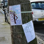 Cavendish Road N4 - Tree threatened # 3 thumbnail
