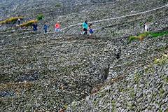 Walking Among the Terraces (Battle Royale1) Tags: japan ehima uwajima yusumizugaura terraced fields