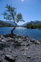 Llyn Padarn (mlomax1) Tags: 80d canoneos80d cymru dwrcymru eos80d lakemountain padarn snowdonia wales water canon llynpadarn outdoor sky tree
