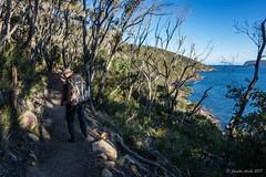 Along the track (NettyA) Tags: 2017 3capestrack australia sonya7r tasmannationalpark tasmania tassie threecapestrack bushwalking hike bushwalkers track trail path