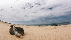 8mm by the sea (FMCRphotography) Tags: 8mm seascape sky sea shade color bw bottle wood sand rocks water warm cold