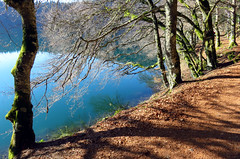 Auverniae. Lac Pavin. p41017 (713) (joseluisgildela) Tags: auvernia lacpavin lagos esenciadelanaturaleza árboles