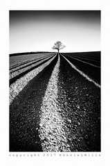 Imperfection (RonnieLMills) Tags: ploughed field furrows leading lines imperfection lone tree ballyrogan mono monochrome bw blackandwhite noiretblanc blancoynegro farming agriculture