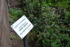 Stima (Colombaie) Tags: farrara gita emiliaromagna città turismo turisti visitare dedica annagrazia guerrigliera verde aiuola pubblica viasavonarola