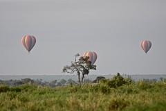 Balloons Across the Mara (The Spirit of the World) Tags: ballooons hotairballoons balloonsafari safari gamedrive nationalpark gamereserves africa graasland morning haze masiamara kenya eastafrica