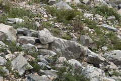 "American Pika • <a style=""font-size:0.8em;"" href=""http://www.flickr.com/photos/63501323@N07/34502350991/"" target=""_blank"">View on Flickr</a>"
