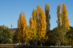 Autumn Colours, Canberra (Anna Calvert Photography) Tags: australia canberra lakeburleygriffin travelphotography autumn autumncolours landscape landscapephotography nature trees water blackmountain telstratower sculpture