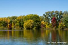 Autumn colours (Anna Calvert Photography) Tags: annacalvertphotography landscapes nature outdoors plants molongloriver trees autumn water river canberra australia