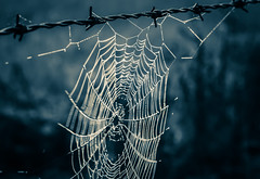 ..barbed web..(explored, thanks so much) (dawn.tranter) Tags: dawntranter web sepia barbed fence wire closeup
