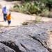 Petroglyphs everywhere at Signal Hill, Saguaro NP